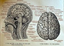 historical brain diagram